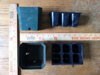 The 10.2 x 10.2 x 7.6 cm container compared against the 2.5 x 2.5 x 5 cm seed tray used to grow the seedlings.