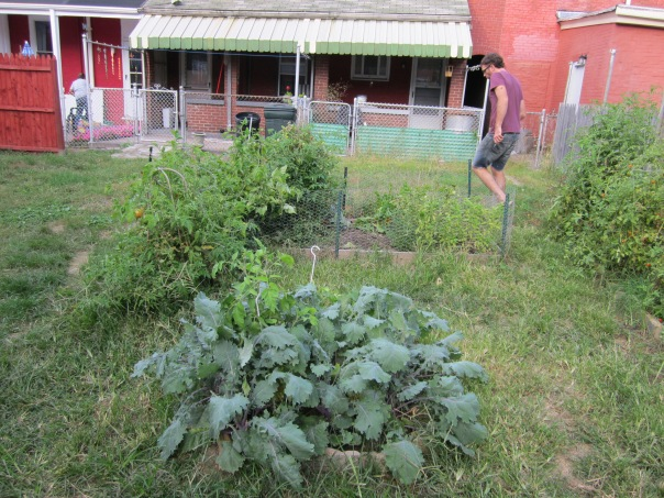 Part of the BCGG located behind Denise's house in 2011.  Note the Kale in the front.